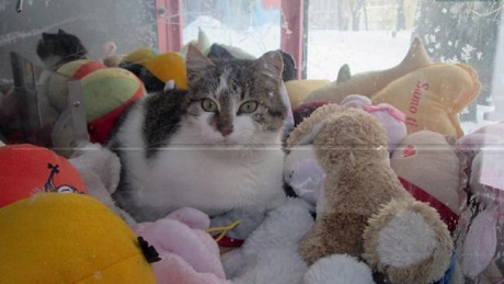 cat in claw machine